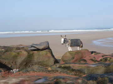 Donkey on the beach!
